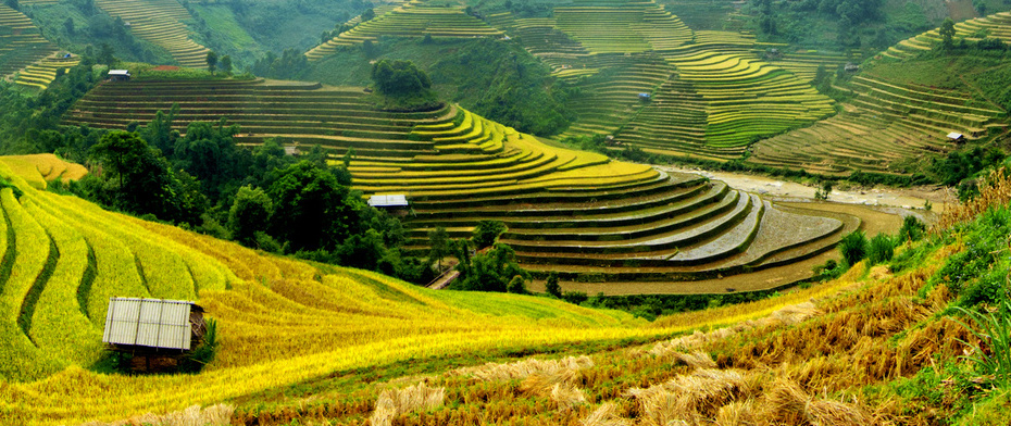 TERRACED FIELD